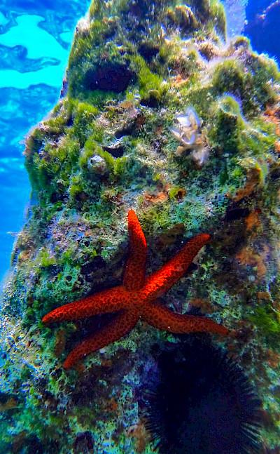 Starfish in Ithaca, Ionian Islands, Greece. Flickr:Spiros Vathis