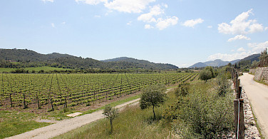 Riding past vineyards in Mallorca, Spain. Photo courtesy of Tour Operator.
