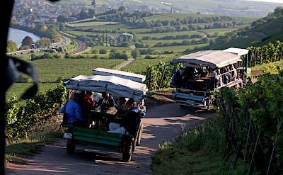 Wine tasting on the Koblenz to Bad Wimpfen Germany Bike Tour. Photo via TO