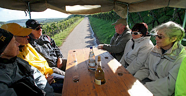 Wine tasting on the Koblenz - Bad Wimpfen Germany Bike Tour. Photo via TO