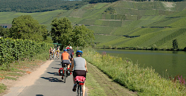 Vineyards galore on Koblenz to Saarburg Germany Bike Tour. Photo via Tour Operator
