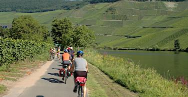 Vineyards galore on Koblenz to Saarburg Germany Bike Tour. Photo via Tour Operator