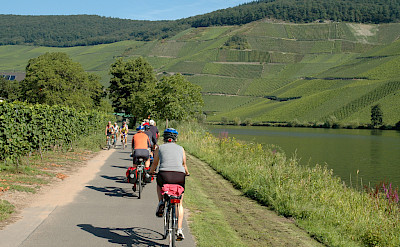 Vineyards galore on Koblenz to Saarburg Germany Bike Tour. Photo via TO