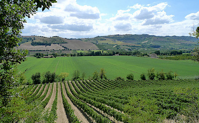 See many vineyards on your Le Marche bike tour. Photo via Flickr:Pizzodisevo