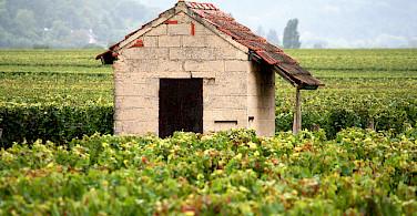 Burgundy. Photo via Flickr:Megan Mallen