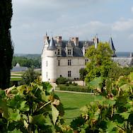 Château d'Amboise set amongst vineyards. Photo courtesy TO