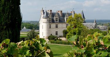 Chateau d'Amboise set amongst vineyards. Photo courtesy Tour Operator.