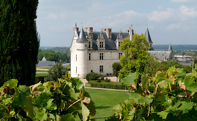 Château d'Amboise set amongst vineyards. Photo courtesy TO