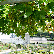Loire Valley - Tours to Angers Photo