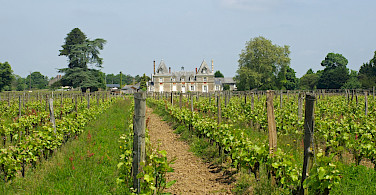 Vineyards and chateaux in Anjou, France. Flickr:Daniel Jolivet