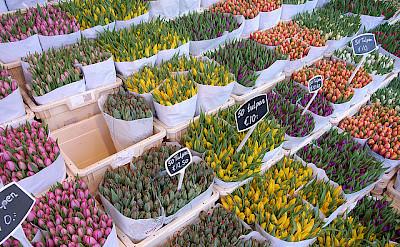 Bloemenmarkt - tulip market in the Netherlands. Flickr:Steve Cadman