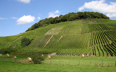 Vineyards in Remich, Luxembourg. Flickr:Sjaak Kempe