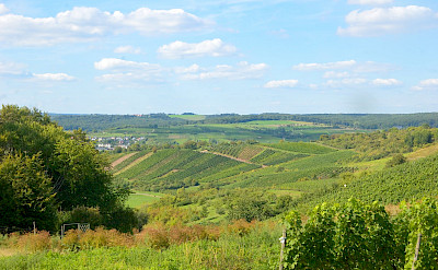 Vineyards in Remich, Luxembourg. Flickr:Tristian Schmurr