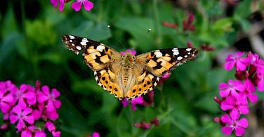 Flora and fauna in Croatia!