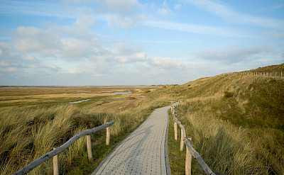 Bike path on the Frisian Island of Texel on the Wadden Sea in the Netherlands. Flickr:Johan Wieland