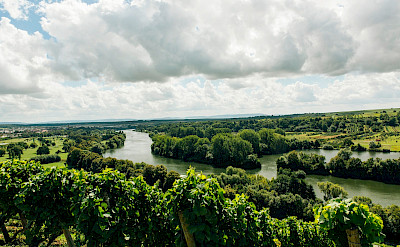 Vineyards and green valleys around Volkach, Germany. Flickr:Mark Usspiske