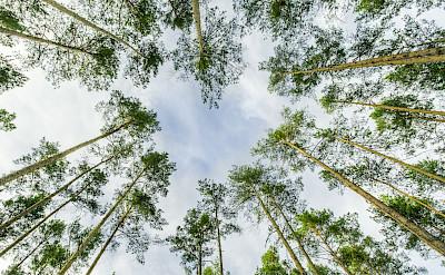 Forest in Erlangen, Germany. Flickr:Jen Splinzler