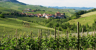Famous Barolo wine region in the Piedmont, Italy. Photo via Flickr:Roberto Ferrito