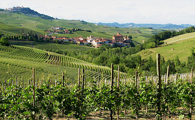 Famous Barolo wine region in the Piedmont, Italy. Flickr:Roberto Ferrito