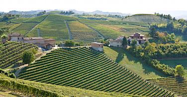 More vineyards in Nieve, Italy. Photo via Flickr:Eirik Solheim