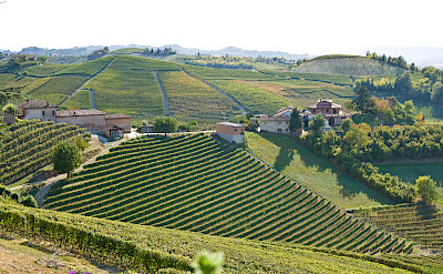 More vineyards in Nieve, Italy. Photo via Flickr:Eirik Solheim