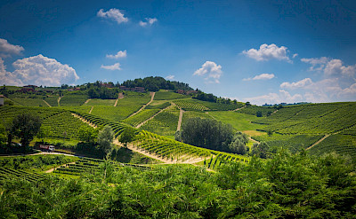 Vineyards galore in the hills of Barolo in Piedmont, Italy. Flickr:Adrian Scottow