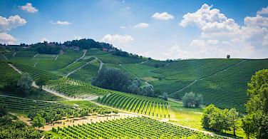 Hills of Barolo in Piedmont, Italy. Flickr:Adrian Scottow