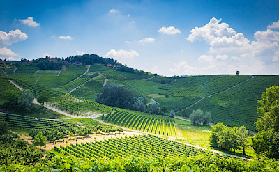 Hills of Barolo in Piedmont, Italy. Flickr:Adrian Scottow