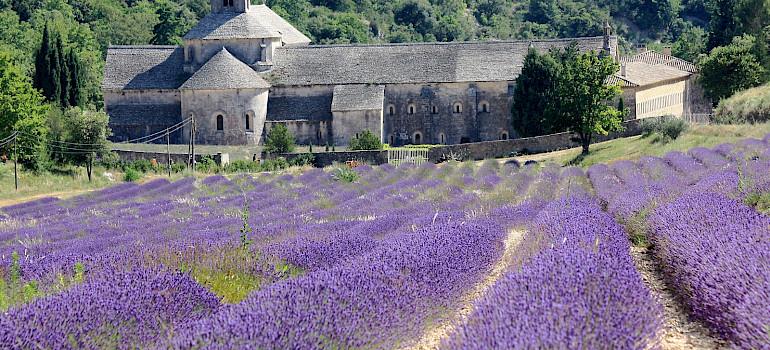 Abbaye de Sénanque among lavender fields in Provence. Flickr:Andrea Schaffer