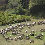Provence - Van Gogh Photo