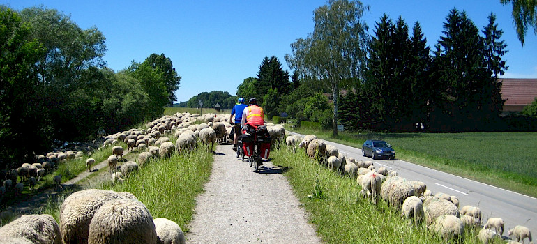 Crossing sheep in Passau, Lower Bavaria, Germany. Photo via Flickr:Brian Burger