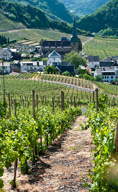 Vineyards abound in the valley of the Ahr River, Germany. Flickr:Robert Brands