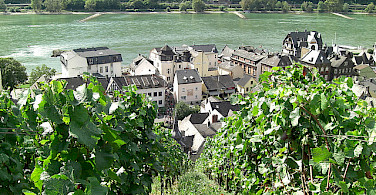 Rheingau wine region! Photo via Flickr:e_calamar