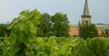Plenty of Vineyards along the German Wine Route to be seen on your bike tour. Photo via Wikimedia Commons:Panchosuenderhauf