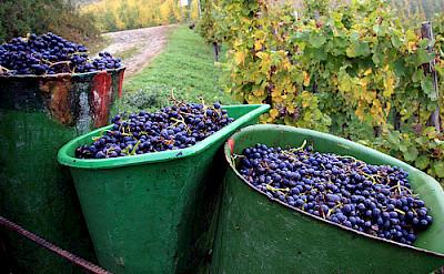 For the famous Wurstmarkt Wine Festival in Bad Durkheim! Photo via Flickr:roblisameehan