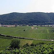 Vineyards in the Wachau region of Austria. Photo via Wikimedia Commons:Lonezor
