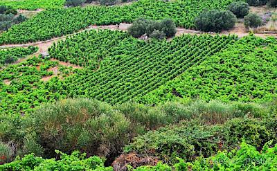 Peljesac Peninsula is a wine-growing region. Flickr:Miroslav Vajdic
