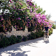 Cycling scenic Southern Dalmatia, Croatia: Photo by Carol Dalton