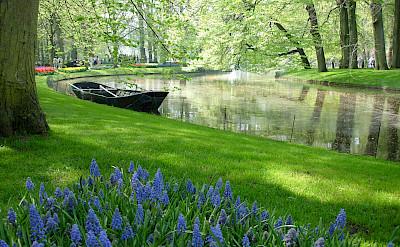 Keukenhof is near Lisse, South Holland, the Netherlands. Flickr:Borkir Sigurbjornsson