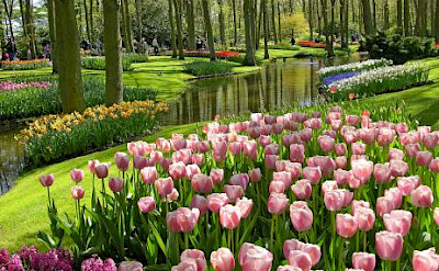 The beauty of Keukenhof, near Lisse, South Holland, the Netherlands.