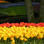 Holland Southern Tulip Tour Photo