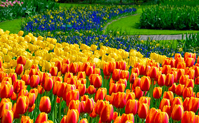 Tulips galore at the Keukenhof, Lisse, South Holland, the Netherlands. Flickr:Adriano Aurelio Araujo