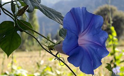 Flora in Dalyan, Turkey. Flickr:Rev Stan