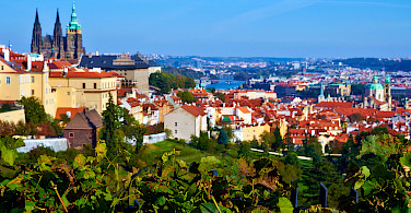 Vineyards and castles in Prague, Czech Republic. Photo via Flickr:Moyan Brenn