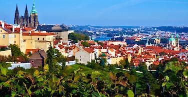 Vineyards and castles in Prague, Czech Republic. Photo via Flickr:Moyan Brenn