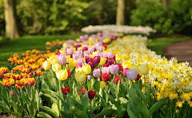 Tulips at the Keukenhof, Lisse, South Holland, the Netherlands. Photo via Flickr:gnuckx
