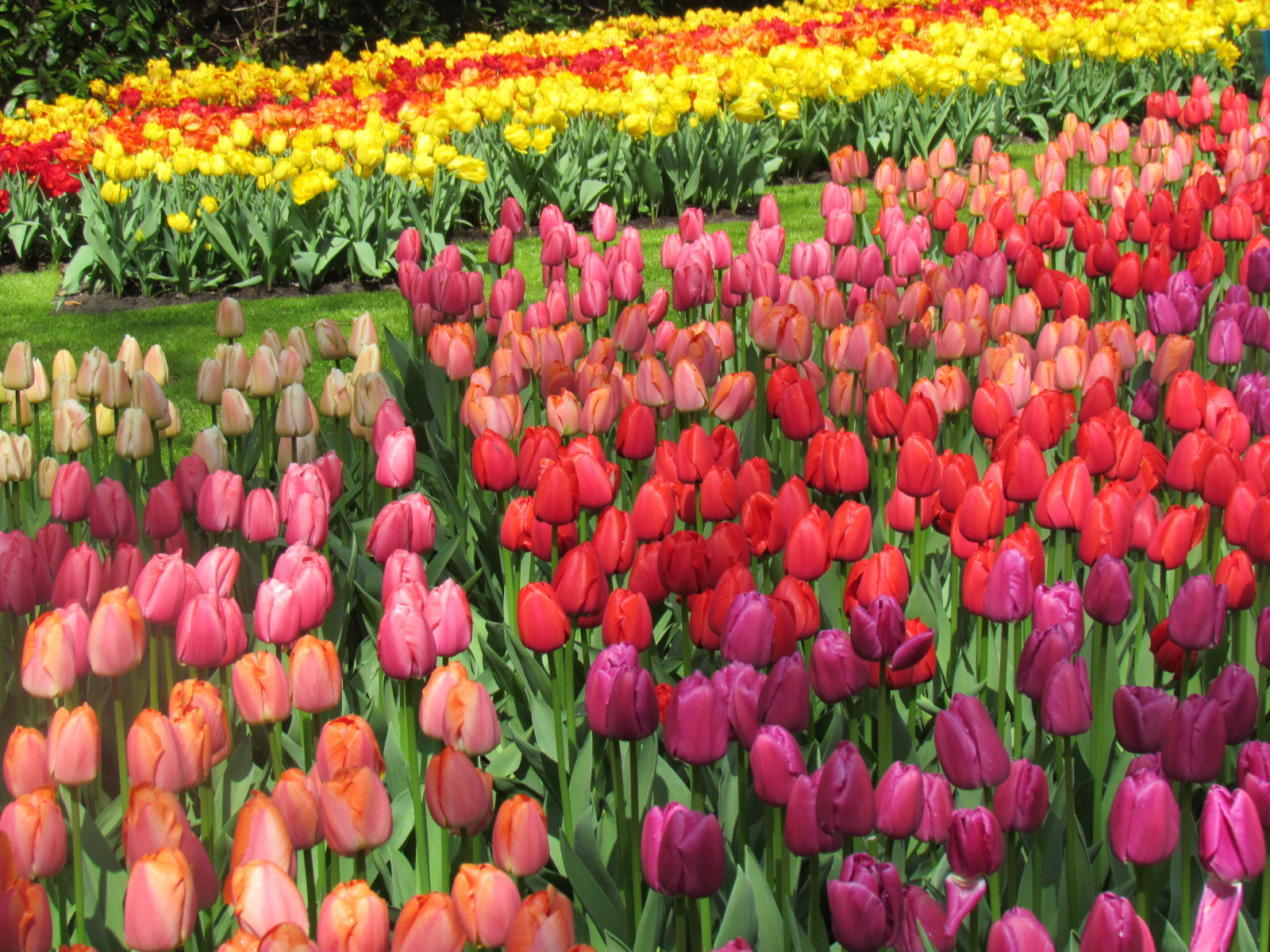 Beautiful Flower Arrangements 4 Day Tulip Bike And Barge Tour Netherlands Tripsite