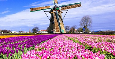 Windmills and tulip fields made Holland famous. Photo via Flickr:Matheus Swanson