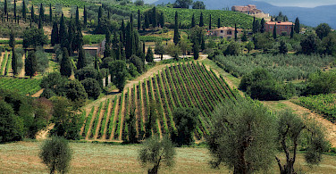 Montalcino wine region in Tuscany, Italy. Photo via Flickr:Eric Huybrechts