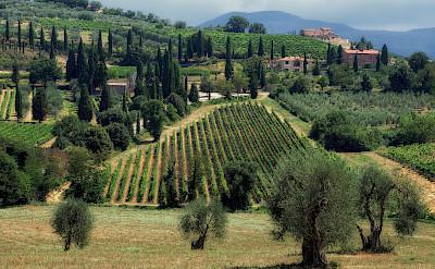 Montalcino wine region near Siena in Tuscany, Italy. Photo via Flickr:Eric Huybrechts